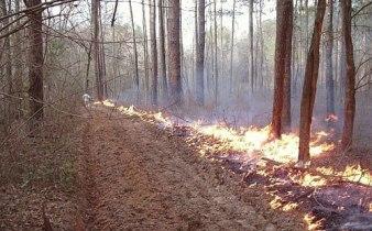 fire_break.141190310_std